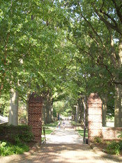 English: Walkway along McKeldin Mall on the campus of the University of Maryland, College Park.