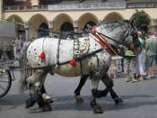 Carriage horses in Krakow