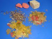 Aquarium - Dried foods for fishes