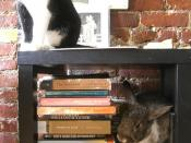 Cat and Bunn do some summer reading