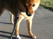 taro dares you to take his beloved stick