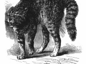Figure 15 from Charles Darwin's The Expression of the Emotions in Man and Animals. Caption reads