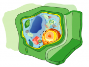 Diagram of the plant cell, with the cell wall in green.