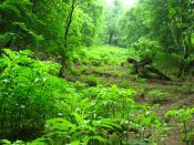 English: North Iran Jungles