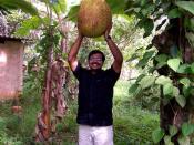 English: Jackfruit found in Kerala, India.