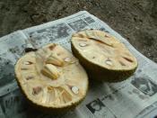 English: An opened Jack Fruit or Artocarpus heterophyllus