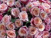 English: rose bunch, Rosa sp. cultivars, flower market, Place Monge, Paris Français : bouquet de roses, Rosa sp. horticoles, marché aux fleurs, Place Monge, Paris