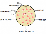 Illustration of the how the semi-permeable membrane works in cell microencapsulation.