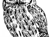 Line art of a screech owl.