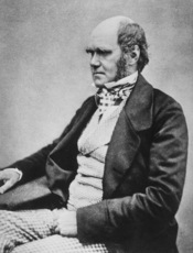 English: Photograph of Charles Darwin. According to the son of Charles Darwin, Francis Darwin, this portrait is by Messrs. Maull and Fox Darwin F. 1899. The Botanical Work of Darwin. Annals of Botany 13: ix - xix. ; he writes that