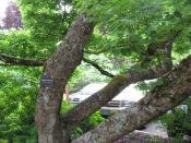 Hoyt Arboretum - Portland, Oregon