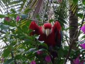English: Angry Scarlet Macaw, My grandson James O'Neal Lowery took this one, and is happy to release the pic into the public domain, another young mind contributing to world knowledge!