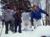 Reintroduced wolves being carried to acclimation pens, Yellowstone National Park, January, 1995.