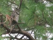 owl-shamrock-park-venice_crop1_1024x768_4739
