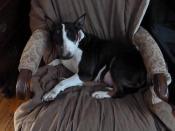 nettie in chair 3