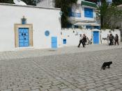 Sidi Bou Seid Cat