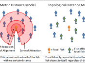 English: A diagram of the concept of metric distance versus topological distance as applied to schools of fish