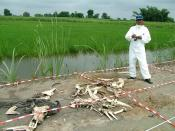 English: Roma Khan doing preliminary work on decomposition of cattle. She finally hopes to open up a Human Anthropological Facility (Popularly known as Body Farm), where similar decomposition on humans would be studied.Anil1956 14:53, 31 December 2006 (UT