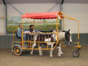 English: Horse drawn litter of a style used formerly as a battlefield ambulance, now as hippotherapy. Nederlands: huifbed_te_Heel