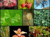 Composite image to illustrate the diversity of plants. See below for image and species list.