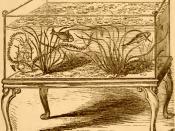 English: Mid 19th Century glass freshwater aquarium, containing Vallisneria spiralis, goldfish, roach, and minnow.