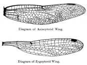 Wings of odonata, dragonflies and damselflies