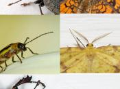 Comparison of insect antennae.