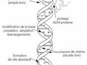 exemples de mutations possibles sur l'ADN