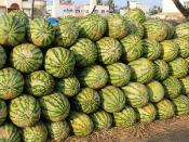 Hassan, melons