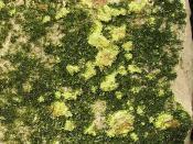 Volborthite-Tyuyamunite-233142