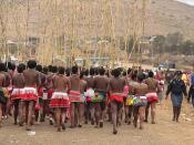 south africa - zulu reed dance ceremony