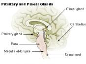Pituitary and pineal glands