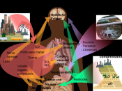 Overview of main health effects on humans from some common types of pollution (See Wikipedia:Pollution#Human health). Model: Mikael Häggström. To discuss image, please see Template talk:Häggström diagrams