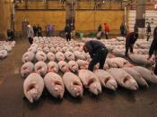 Tuna at a fish market