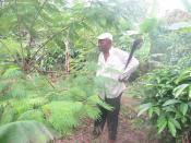 Cameroon-Coffee and Cocoa Agroforestry-January, 2011