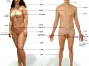 English: Human male and female - anatomical features pointed out