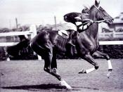 Phar Lap with jockey Jim Pike riding at Flemington race track c 1930