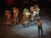 English: Ringling Brothers and Barnum and Bailey Circus Over the Top Tigers