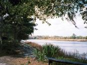 The Ashley River, as seen from Drayton Hall.