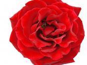 English: Flower Deutsch: Blume Italiano: Fiore