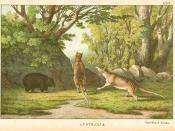Thylacine (Tasmanian Tiger) and wombat lithograph