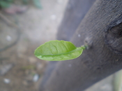 English: This is the last leaf of my garden. Please Stop Global Warming.