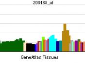 English: Gene expression pattern of the TBP gene.