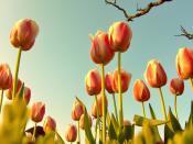 Tulip Era in the Ottoman Empire...