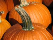 A shot of a pumpkin, focused on its stem.
