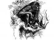 Illustraton of a Chimpanzee