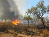 Bushfire in Kakadu National Park, Northern Territory, Australia