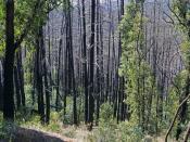 Bushfire regrowth in Australia, 2003; visually representing the spiritual concept of regeneration.