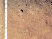 Humic Acrudox (Fine, kaolinitic, isohyperthermic) -- Pedon 9