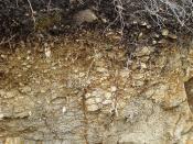 Horizontes de Suelo / Soil Horizons